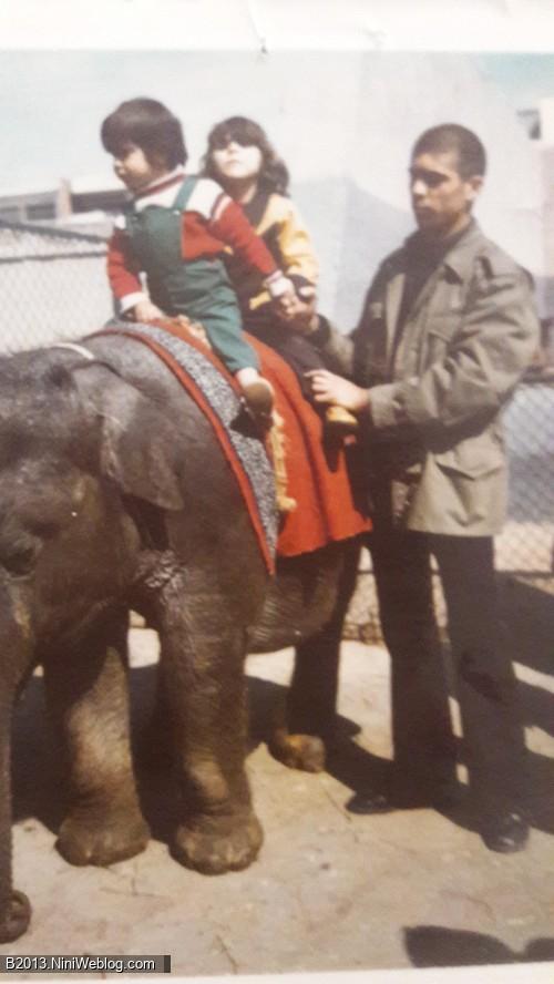 یه نوستالژی برات گذاشتم خفن ... اینجا باغ وحش تهران سال 1355 وقتی عمو حسن مارو برد باغ وحش ...من 4 ساله بودم . پشت سرم عمه لیلا نشسته .