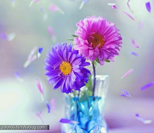 گل گل گـل