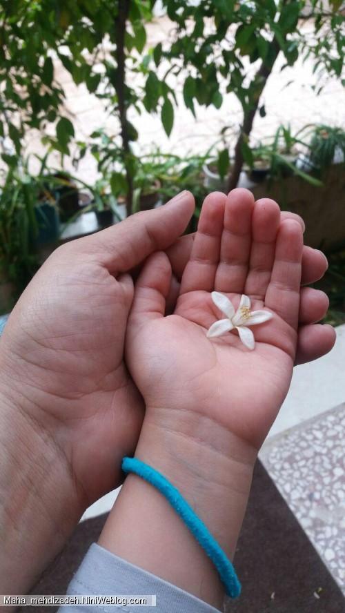 شکوفه های بهاری دردستان توزیباست