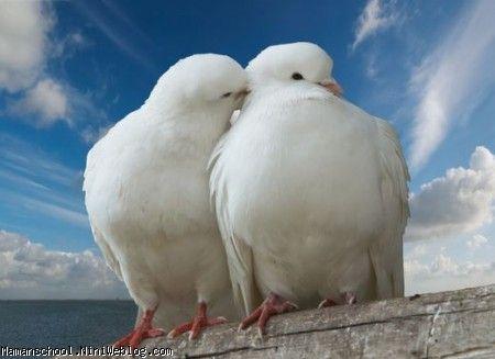 همسرانه نوشت؛ دو کبوتر عاشق!