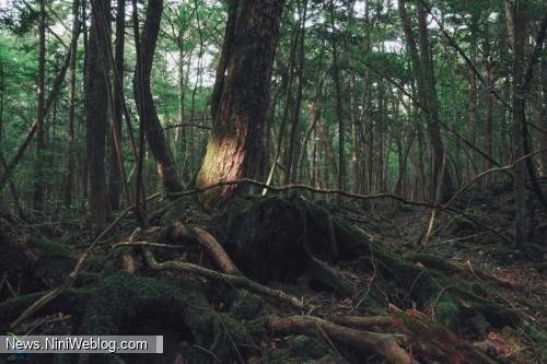 جنگل قاتل در ژاپن