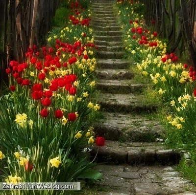 پله های زیادی که دو طرف آن پر از گلهای زرد و قرمز است
