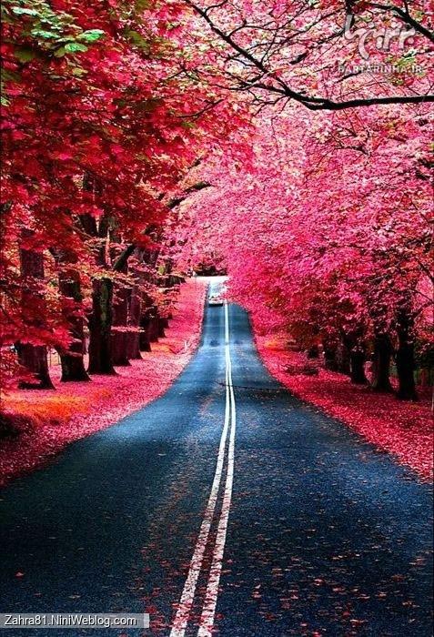 جاده ای که دو طرفش درختان نارنجی و قرمز پر است