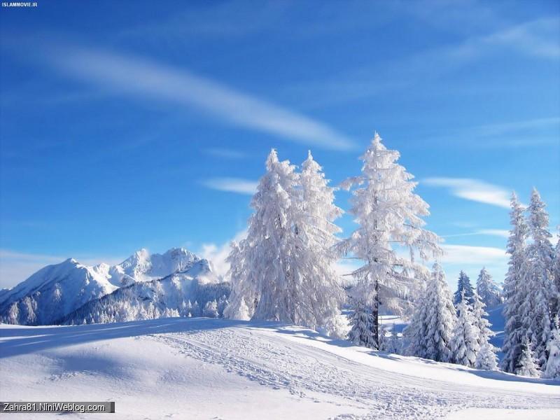 زمین پر از برف و درختان پوشیده از برف و آسمان آبی