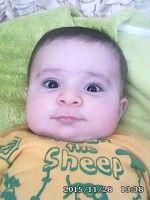 محمد طاها هادی